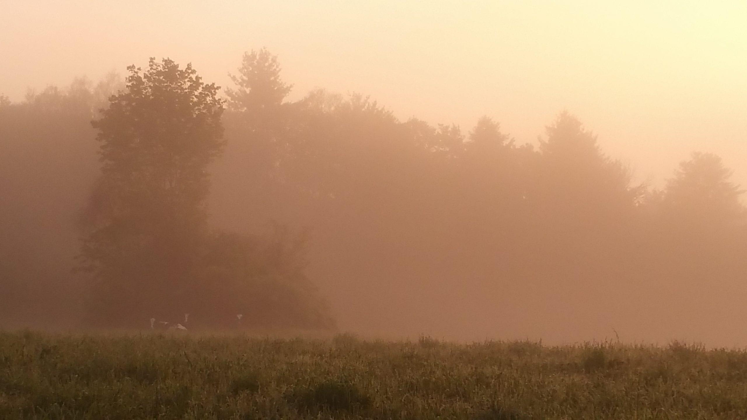 hazy hot humid