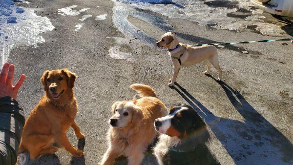 doggie playdate 2